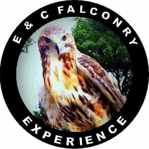 e-c-falconry-experience