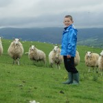 Sheep at Lon Lodges