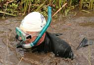 Bog snorkelling, Llanyrtyd Wells