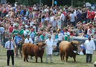 royal welsh show, Builth Wells